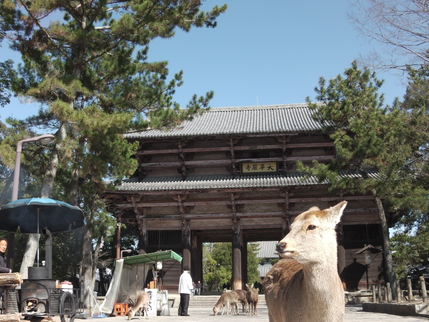 Destination: A Day Trip – Nara, Japan